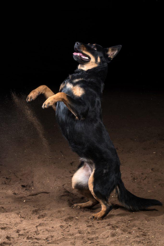 Hund bei einem Trick