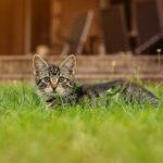 Tiershooting mit Katze