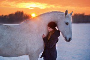 Pferd vor dem Sonnenuntergang
