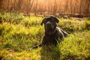 Hund auf Wiese